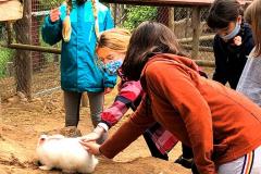 visita-granja-aventura-park-collegi-creanova-2021-014