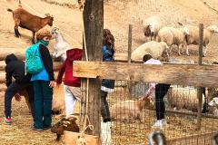 visita-granja-aventura-park-collegi-creanova-2021-015