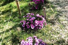 la-primavera-es-aqui-spring-is-here-la-primavera-ha-llegado-collegi-creanova-005