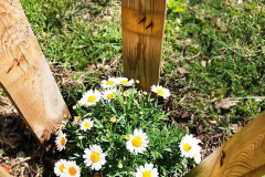 la-primavera-es-aqui-spring-is-here-la-primavera-ha-llegado-collegi-creanova-004