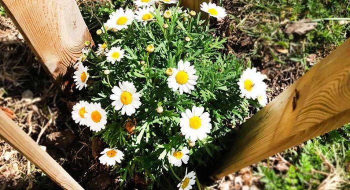 La primavera és aquí! / Spring is here! / ¡La primavera ha llegado!